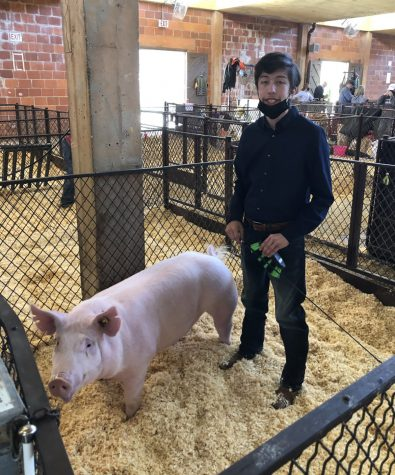 Dallas and Dominik Munoz in the pen at the State Fair in Dallas, Texas.  Munoz won 6th place.